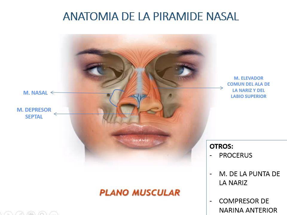 Contemporáneo Anatomía De Superficie De La Nariz Inspiración ...