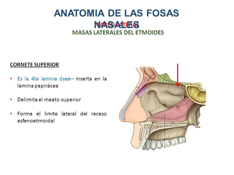 Encantador Qué Significa La Fosa En La Anatomía Cresta - Anatomía de ...