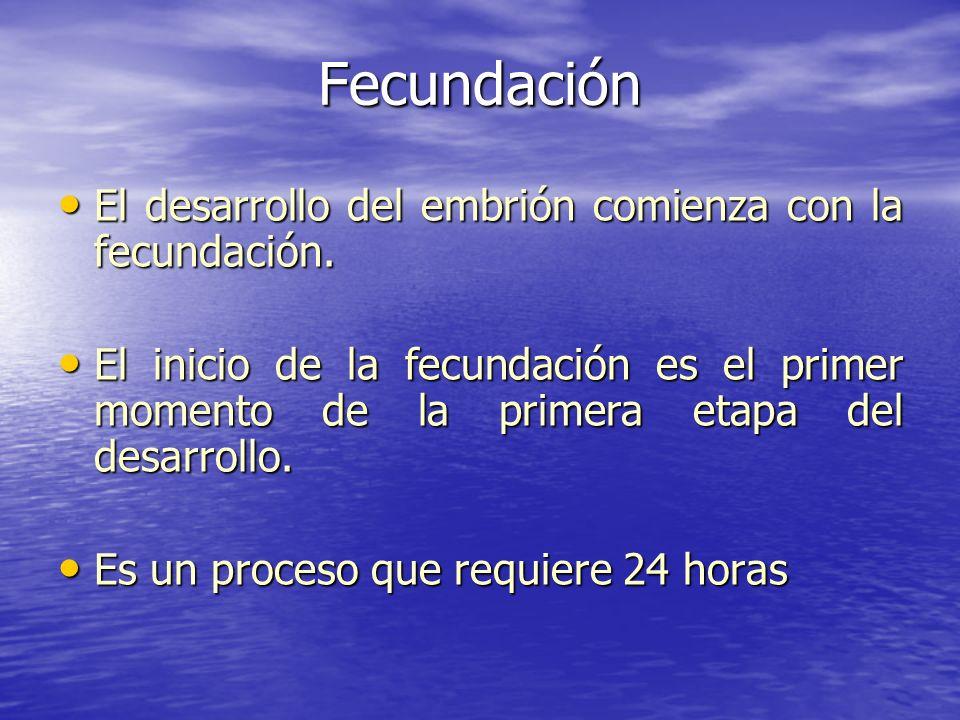 Fecundación El desarrollo del embrión comienza con la fecundación.