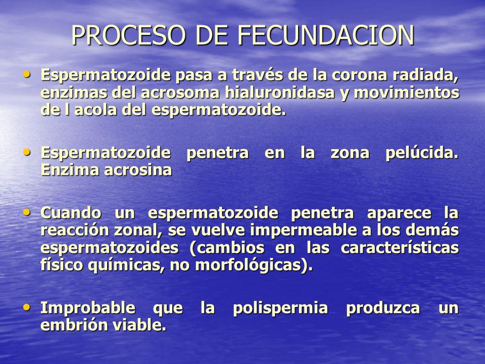 PROCESO DE FECUNDACION