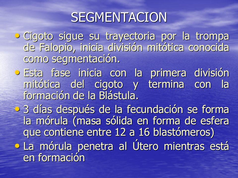 SEGMENTACIONCigoto sigue su trayectoria por la trompa de Falopio, inicia división mitótica conocida como segmentación.