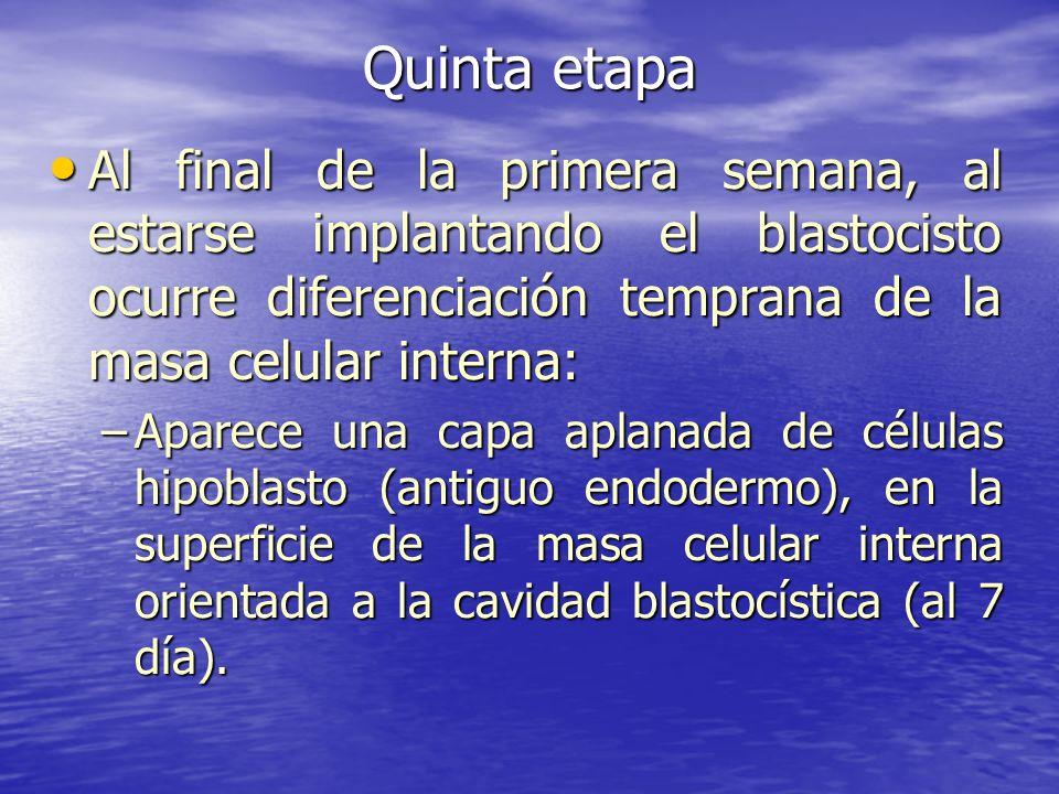 Quinta etapa Al final de la primera semana, al estarse implantando el blastocisto ocurre diferenciación temprana de la masa celular interna: