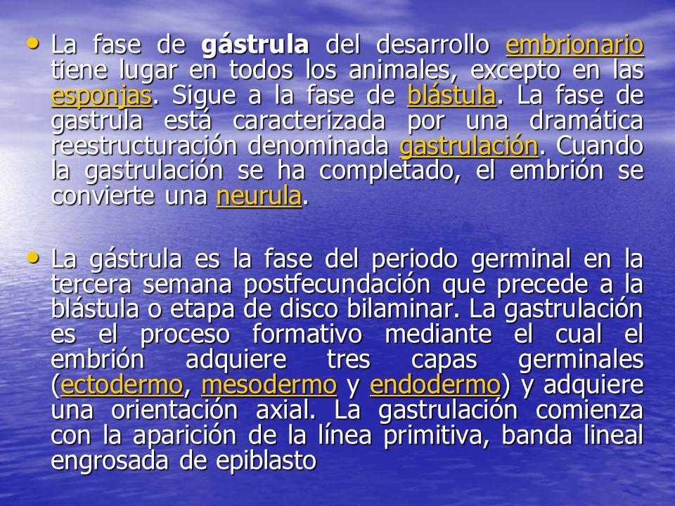 La fase de gástrula del desarrollo embrionario tiene lugar en todos los animales, excepto en las esponjas. Sigue a la fase de blástula. La fase de gastrula está caracterizada por una dramática reestructuración denominada gastrulación. Cuando la gastrulación se ha completado, el embrión se convierte una neurula.