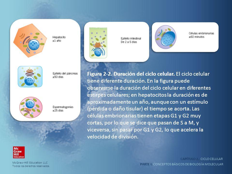 Figura 2-2. Duración del ciclo celular