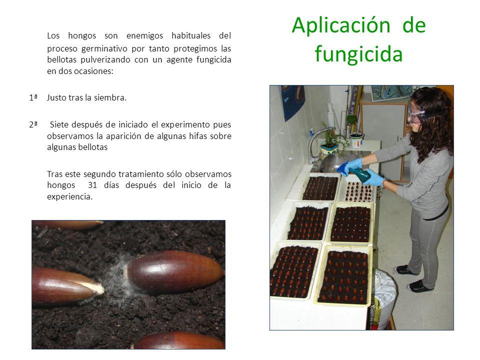Aplicación de fungicida