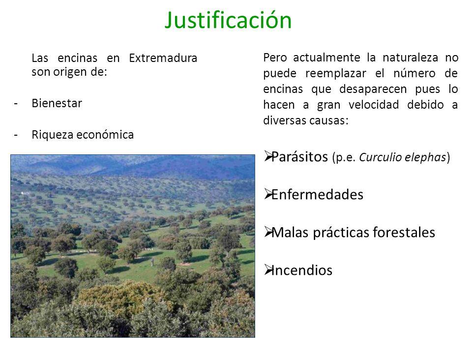 Las encinas en Extremadura son origen de: