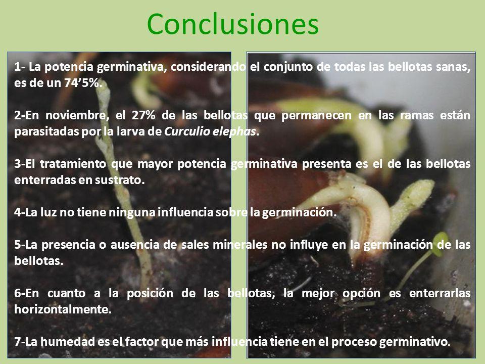 Conclusiones 1- La potencia germinativa, considerando el conjunto de todas las bellotas sanas, es de un 74'5%.