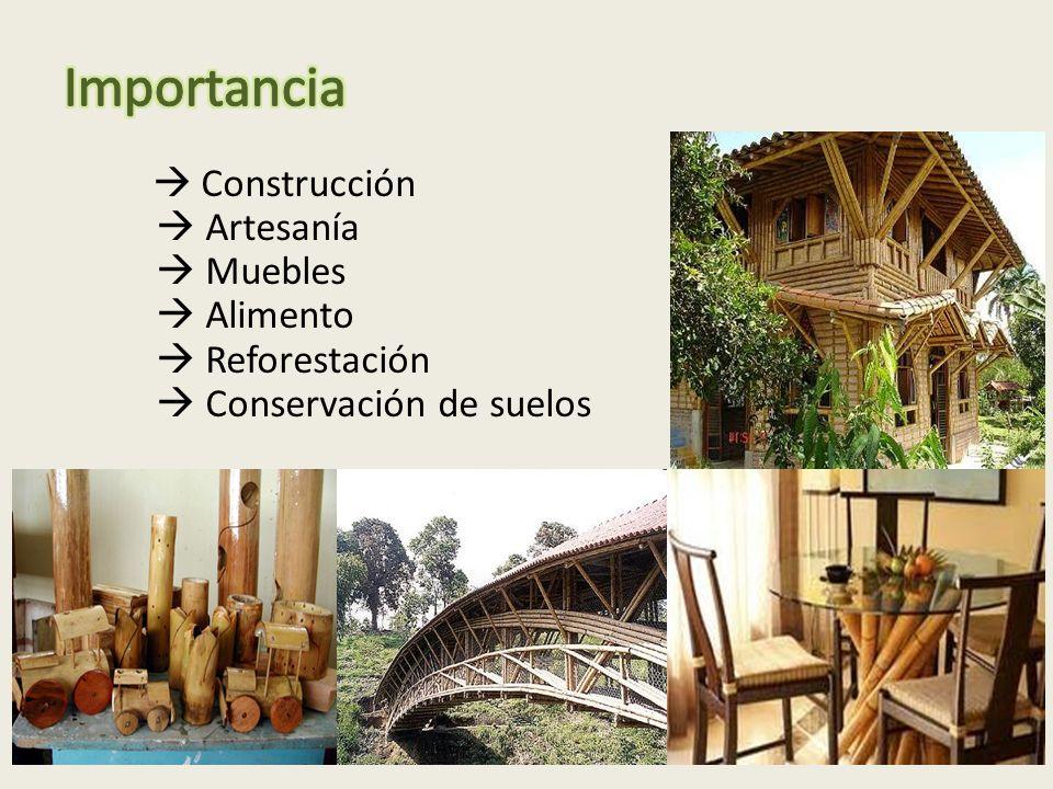 Importancia  Artesanía  Muebles  Alimento  Reforestación