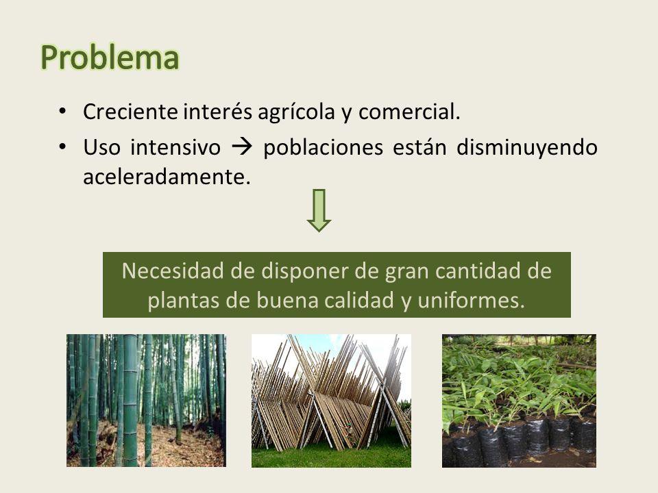 Problema Creciente interés agrícola y comercial.