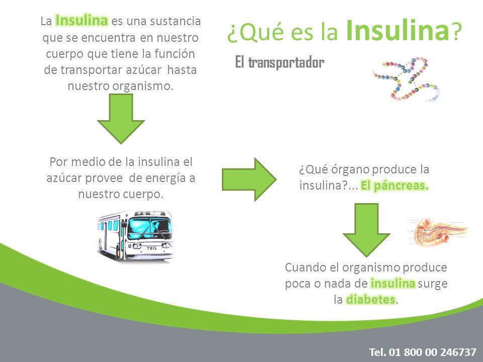 ¿Qué es la Insulina El transportador