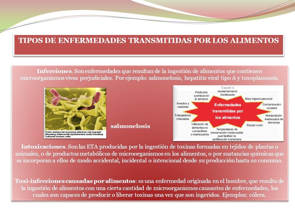 TIPOS DE ENFERMEDADES TRANSMITIDAS POR LOS ALIMENTOS