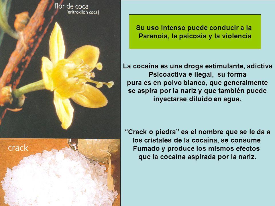La cocaína es una droga estimulante, adictiva