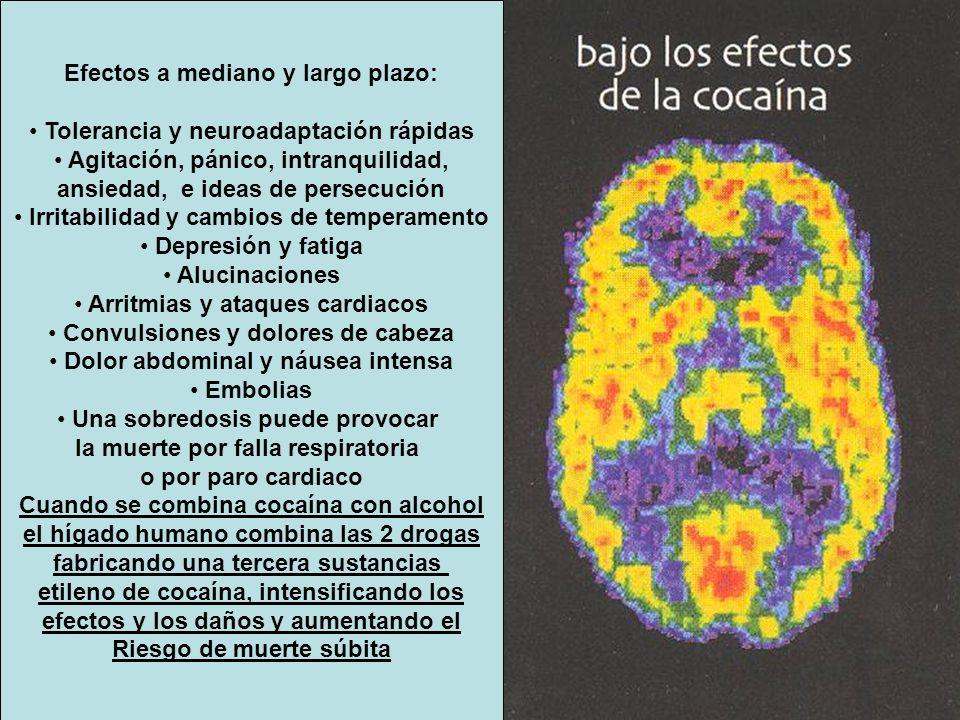 Efectos a mediano y largo plazo: Tolerancia y neuroadaptación rápidas