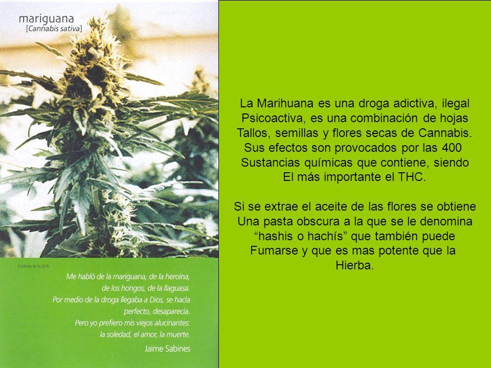 La Marihuana es una droga adictiva, ilegal