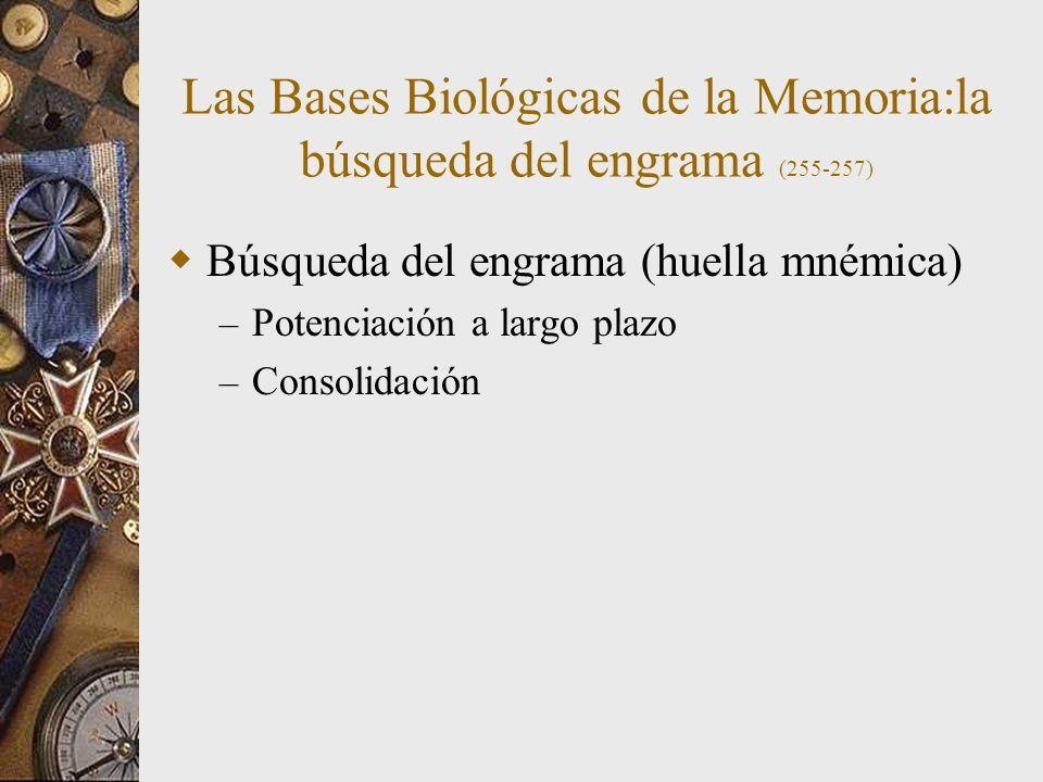 Las Bases Biológicas de la Memoria:la búsqueda del engrama (255-257)