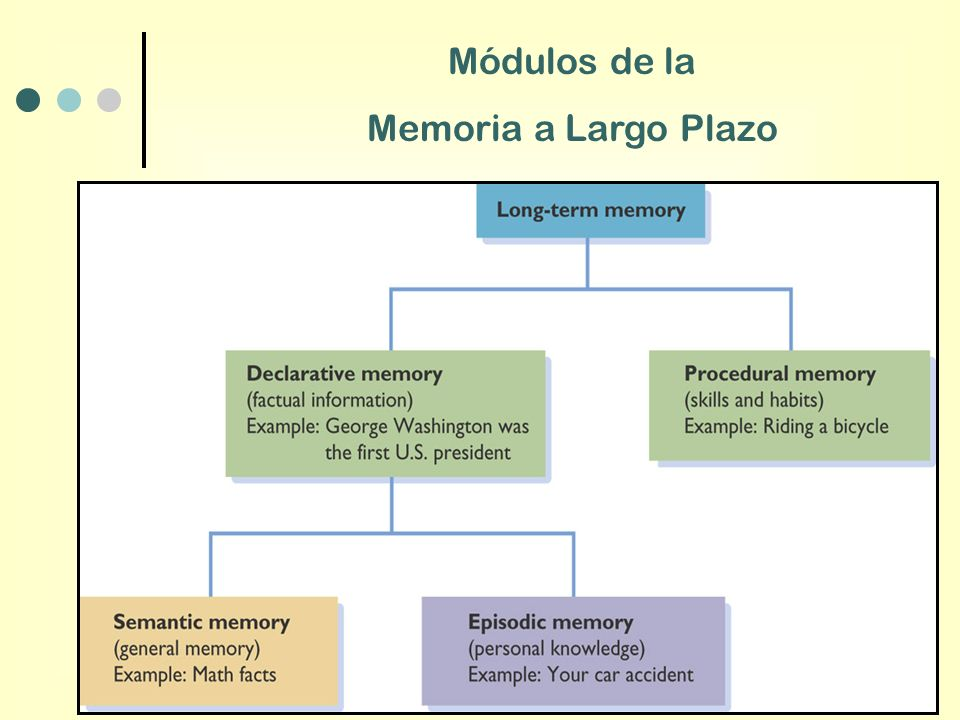 Mdulos De La Memoria A Largo Plazo