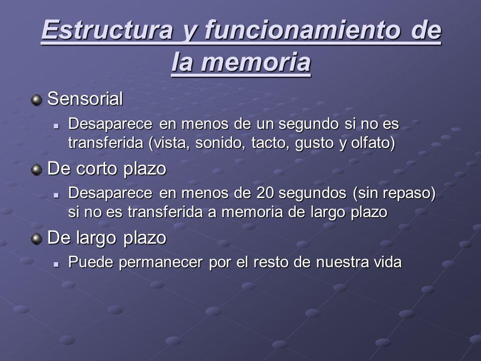 Estructura y funcionamiento de la memoria