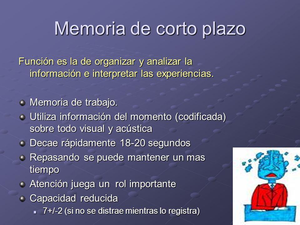 Memoria de corto plazo Función es la de organizar y analizar la información e interpretar las experiencias.