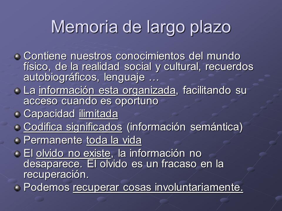 Memoria de largo plazo Contiene nuestros conocimientos del mundo físico, de la realidad social y cultural, recuerdos autobiográficos, lenguaje …