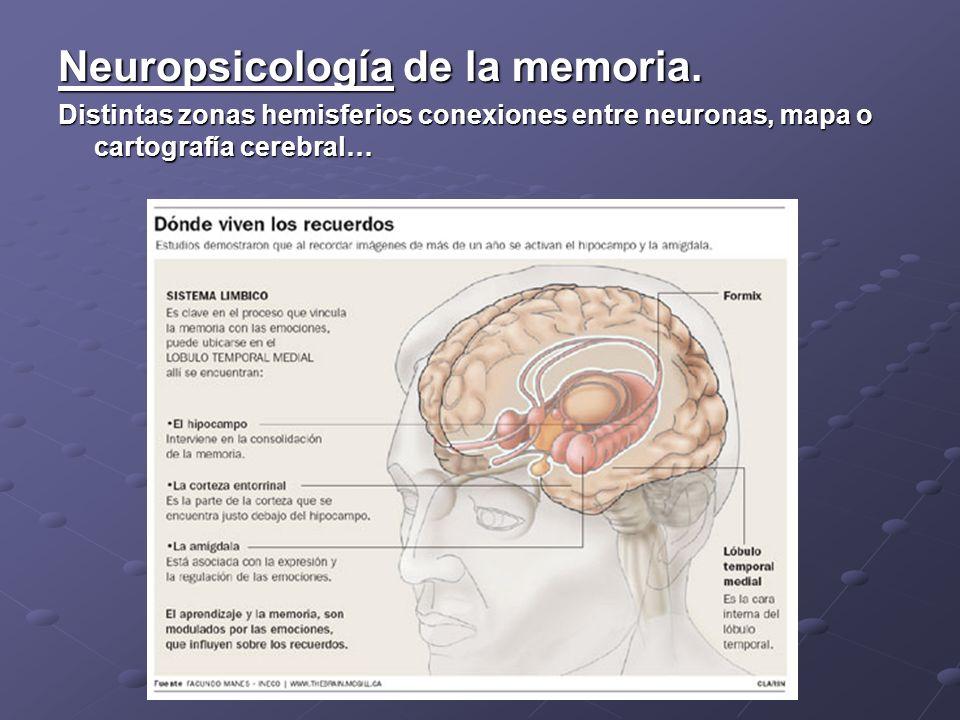 Neuropsicología de la memoria.