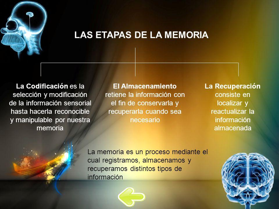 LAS ETAPAS DE LA MEMORIA
