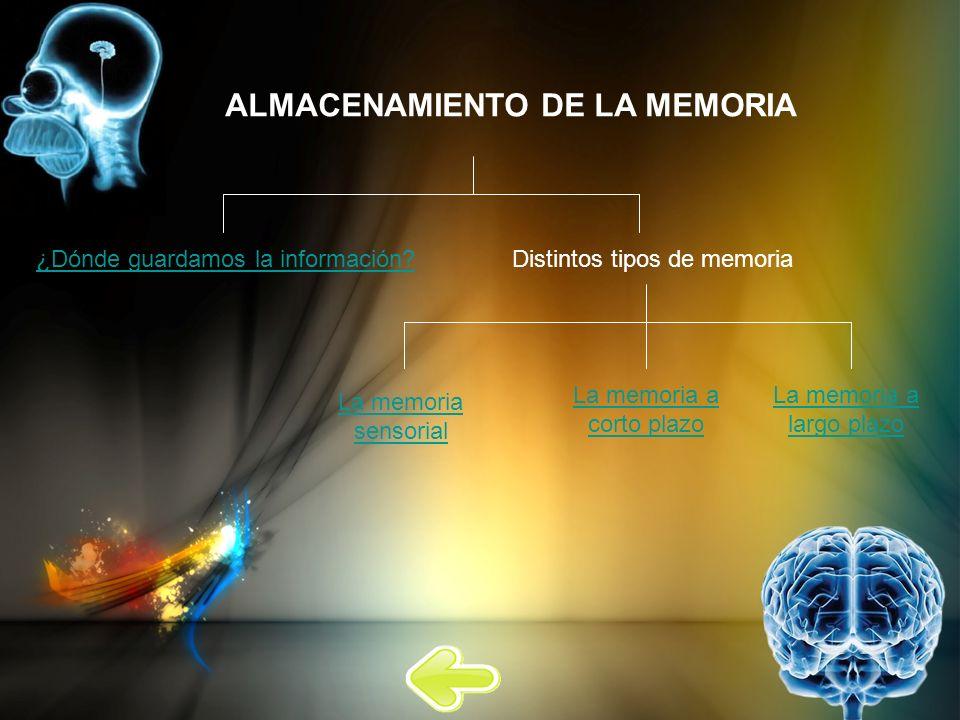 ALMACENAMIENTO DE LA MEMORIA