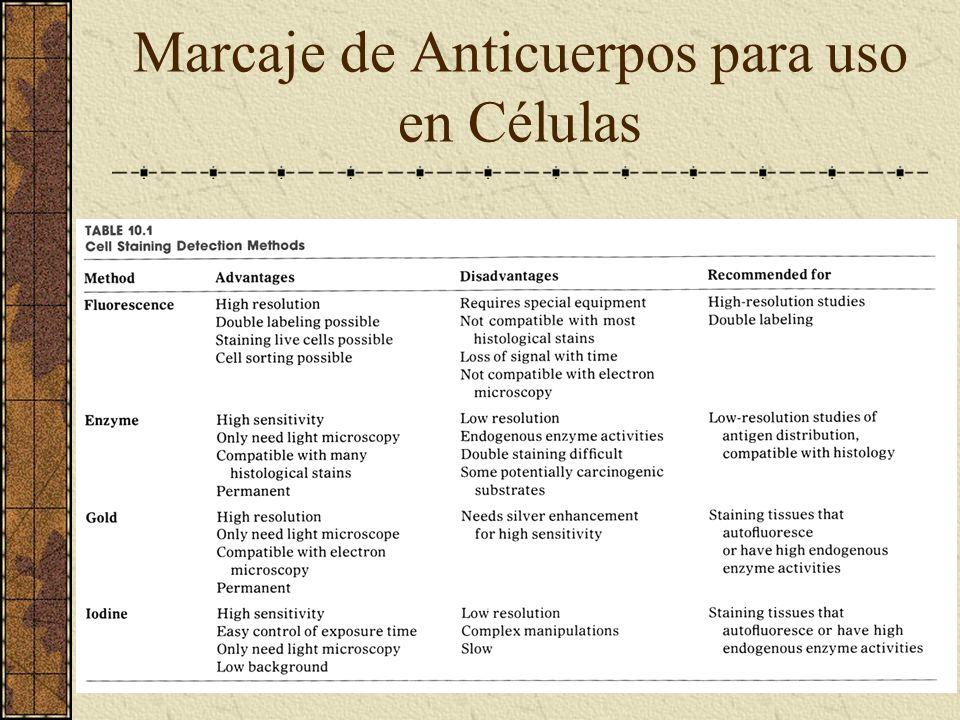 Marcaje de Anticuerpos para uso en Células