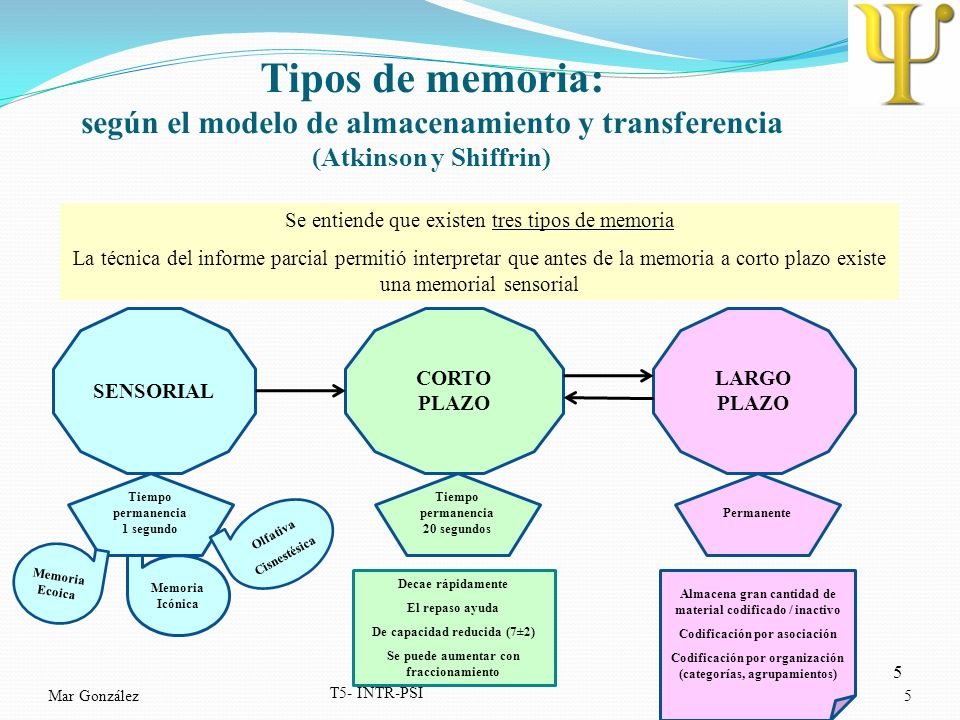 Tipos de memoria: según el modelo de almacenamiento y transferencia (Atkinson y Shiffrin)