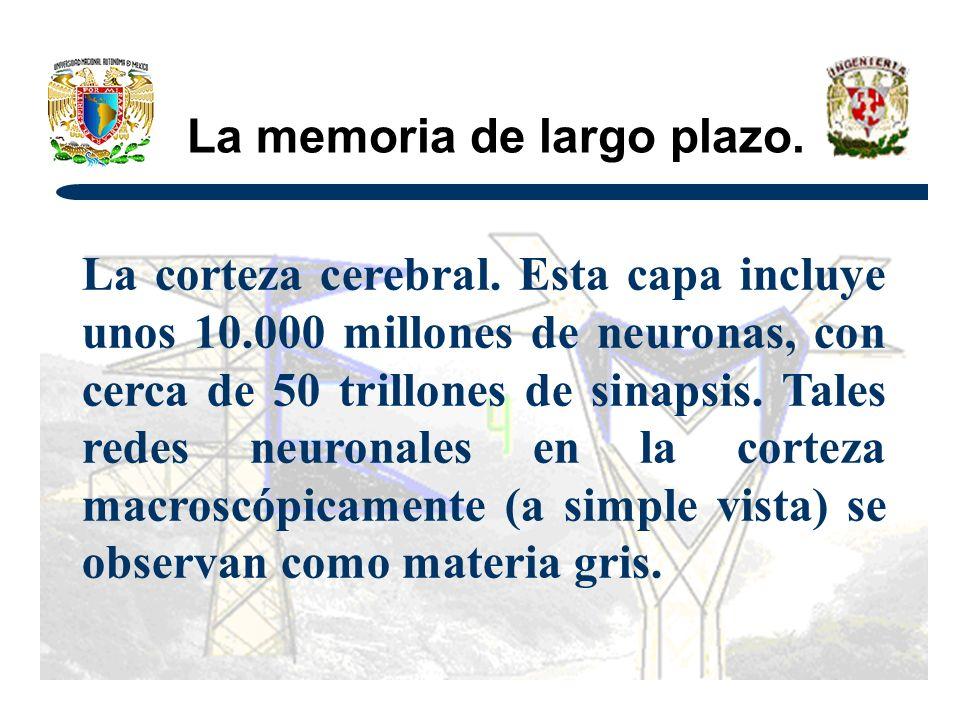 La memoria de largo plazo.