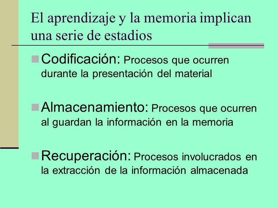 El aprendizaje y la memoria implican una serie de estadios