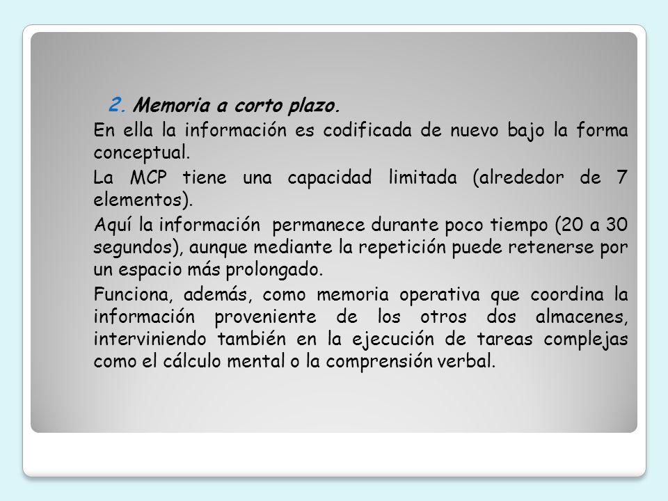 Memoria a corto plazo. En ella la información es codificada de nuevo bajo la forma conceptual.