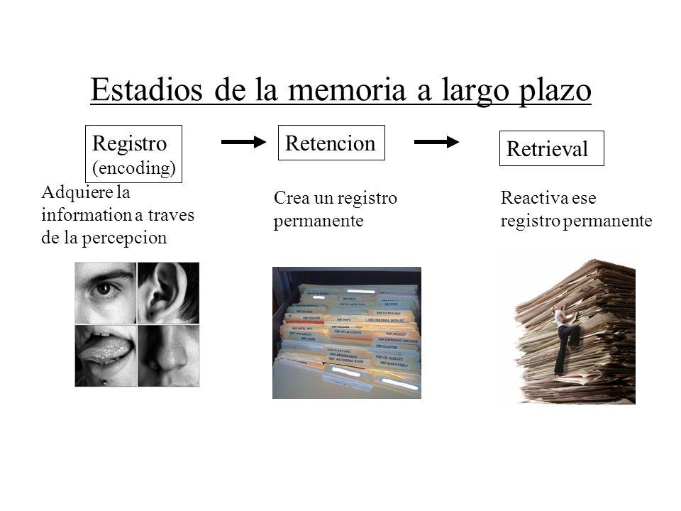 Estadios de la memoria a largo plazo