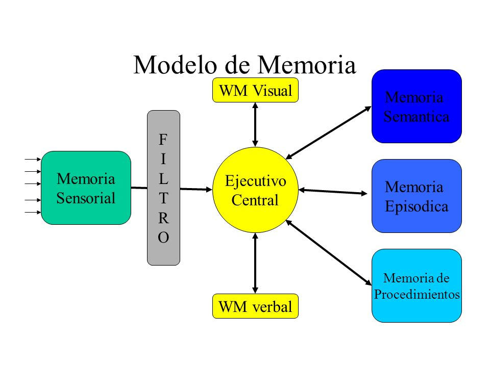 Modelo de Memoria WM Visual Memoria Semantica F I L T Memoria R