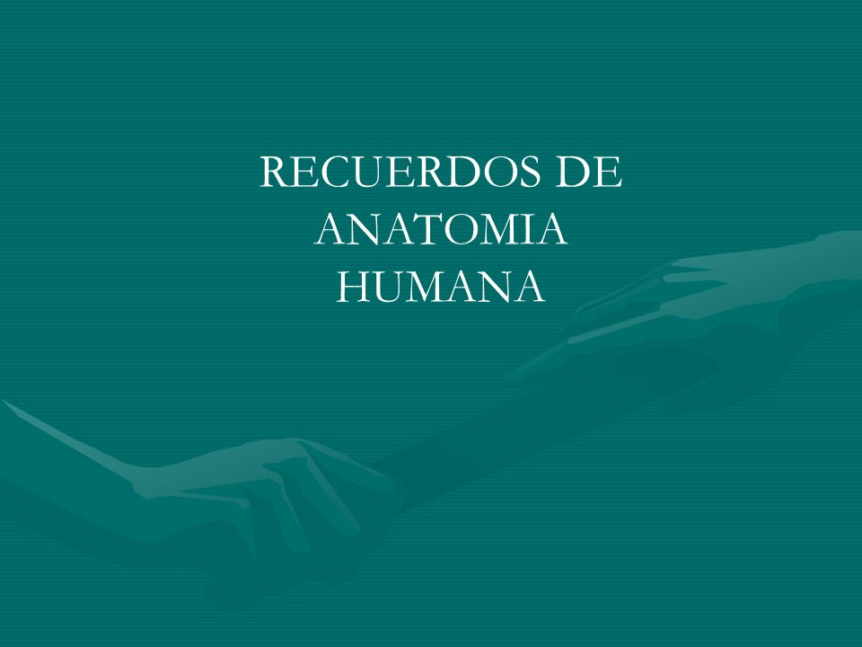 RECUERDOS DE ANATOMIA HUMANA
