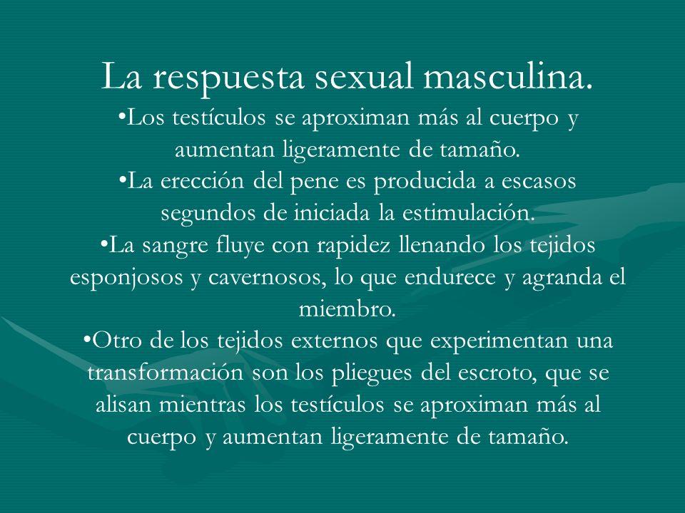 La respuesta sexual masculina.