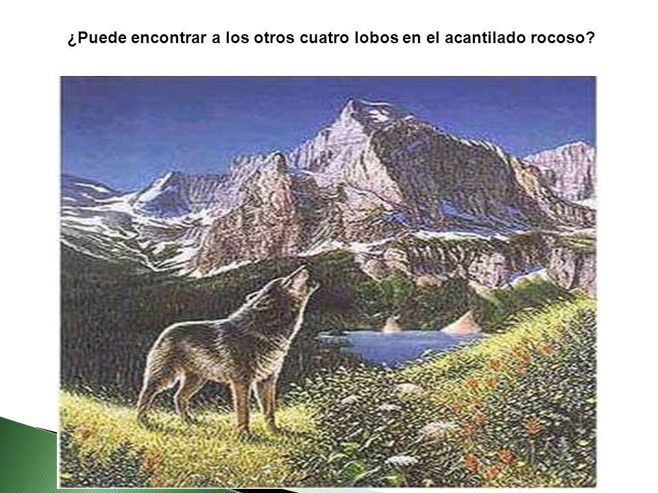 ¿Puede encontrar a los otros cuatro lobos en el acantilado rocoso