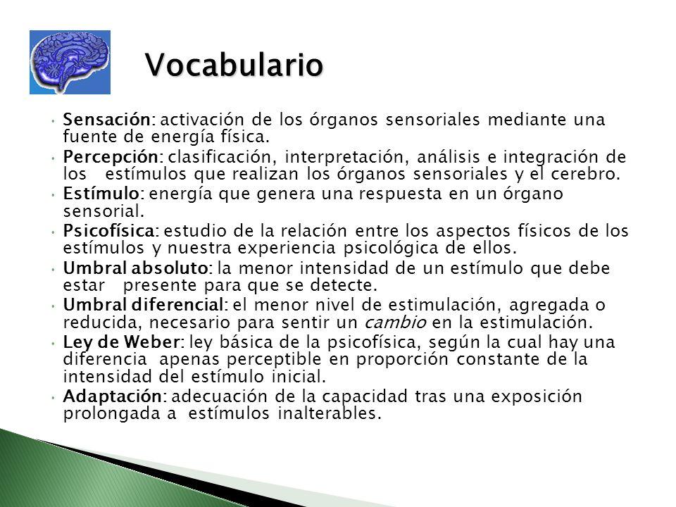 Vocabulario Sensación: activación de los órganos sensoriales mediante una fuente de energía física.