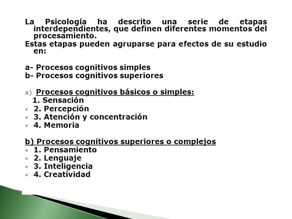 La Psicología ha descrito una serie de etapas interdependientes, que definen diferentes momentos del procesamiento.