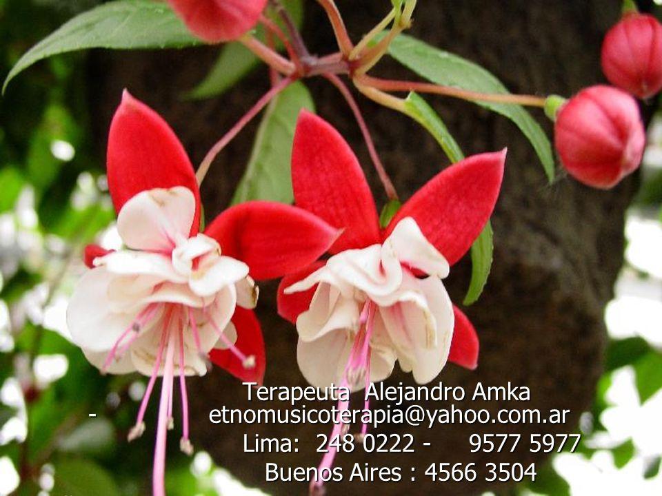 Terapeuta Alejandro Amka - etnomusicoterapia@yahoo.com.ar