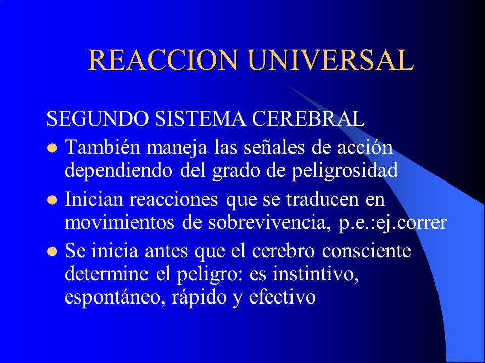 REACCION UNIVERSAL SEGUNDO SISTEMA CEREBRAL