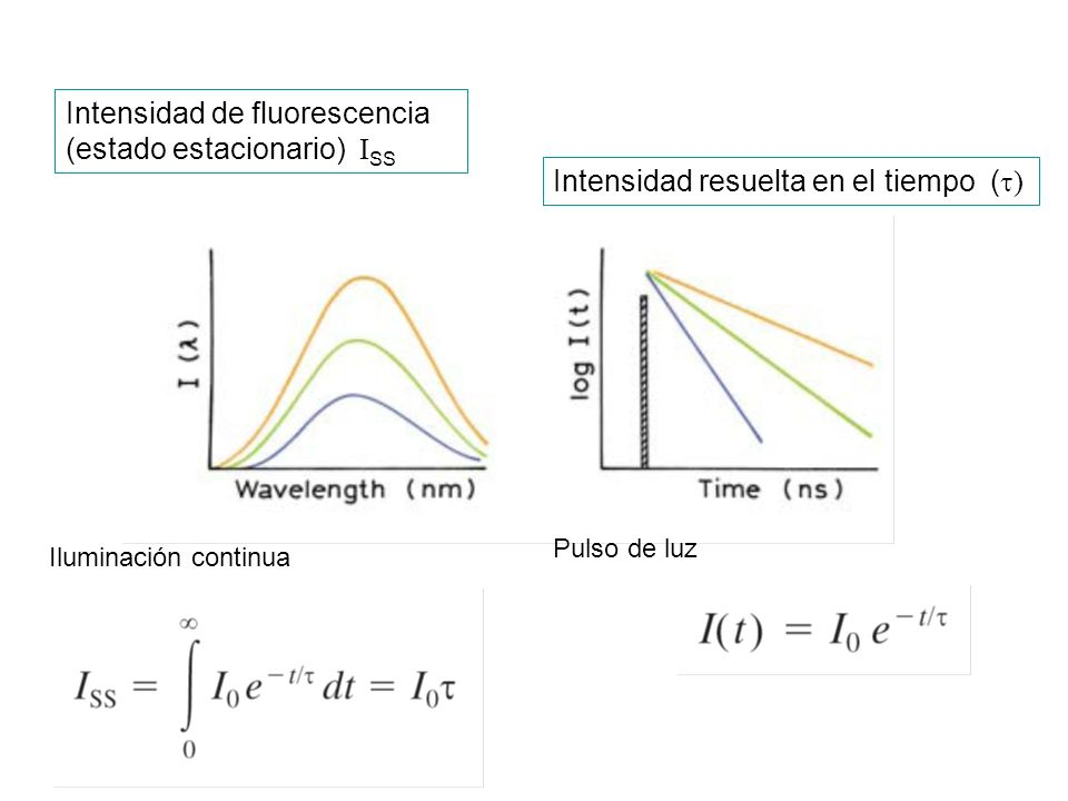 Intensidad de fluorescencia (estado estacionario) ISS