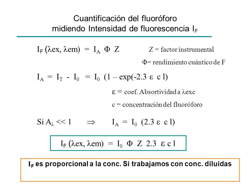 Cuantificación del fluoróforo midiendo Intensidad de fluorescencia IF