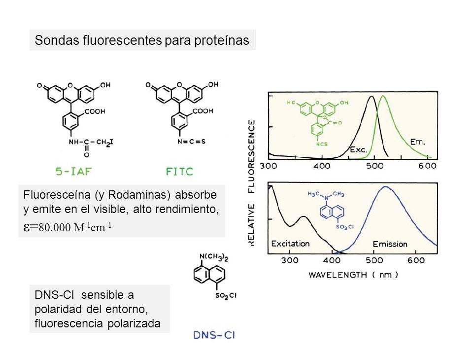 Sondas fluorescentes para proteínas