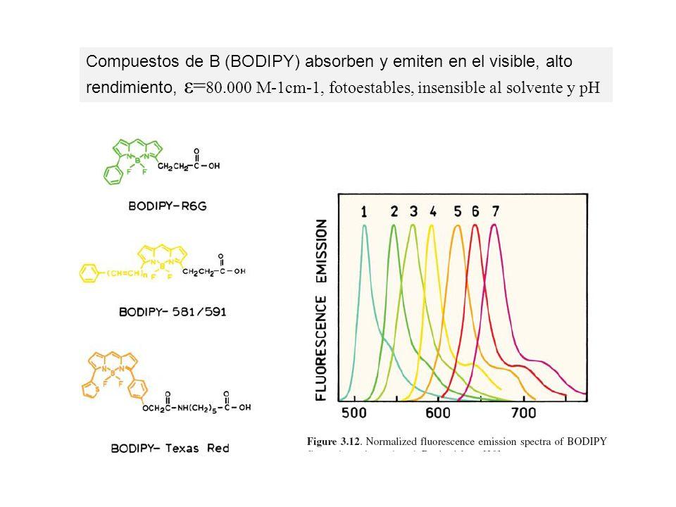 Compuestos de B (BODIPY) absorben y emiten en el visible, alto rendimiento, ε=80.000 M-1cm-1, fotoestables, insensible al solvente y pH