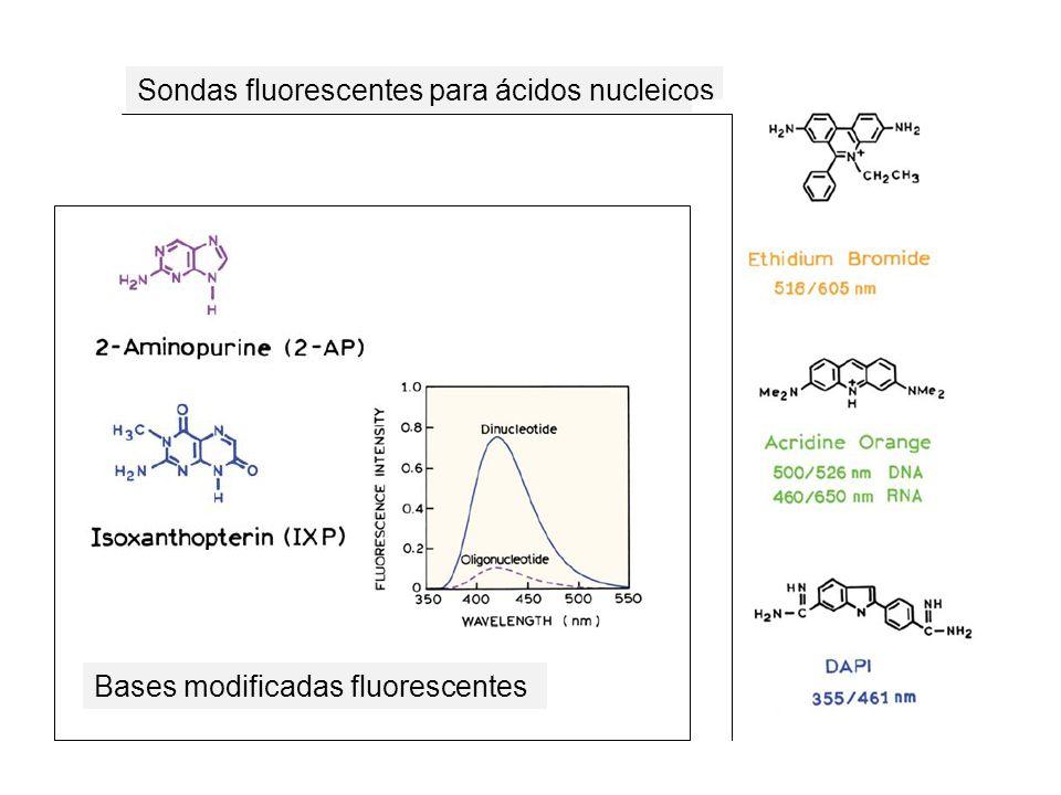 Sondas fluorescentes para ácidos nucleicos
