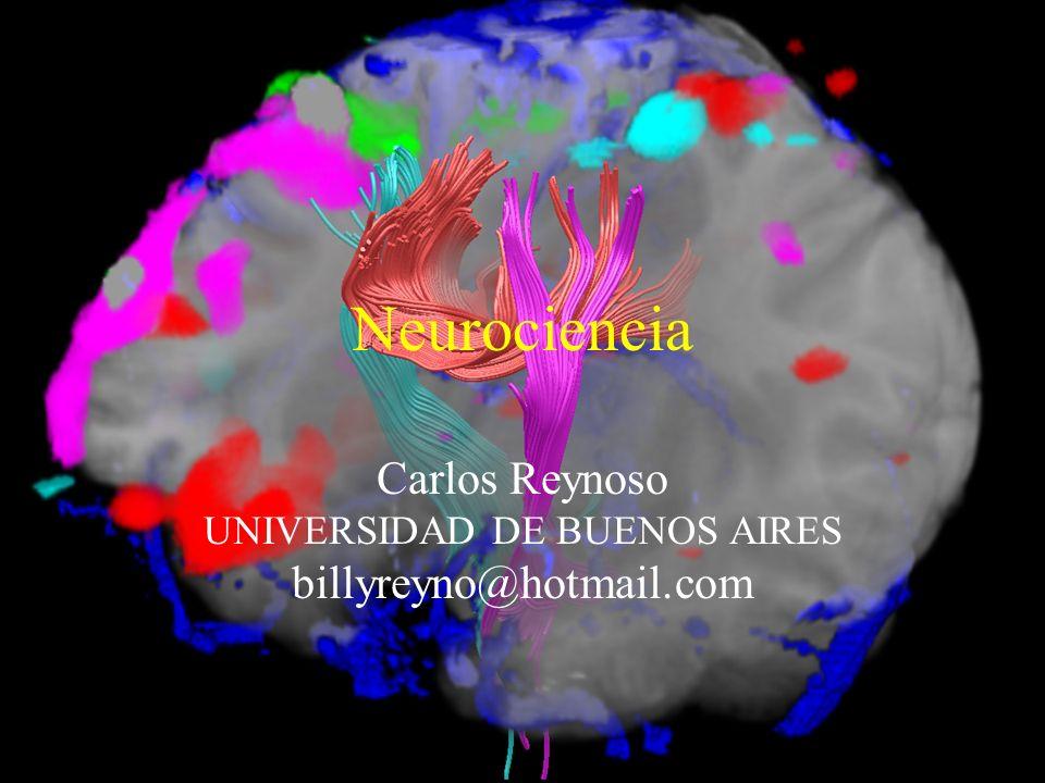 Carlos Reynoso UNIVERSIDAD DE BUENOS AIRES billyreyno@hotmail.com