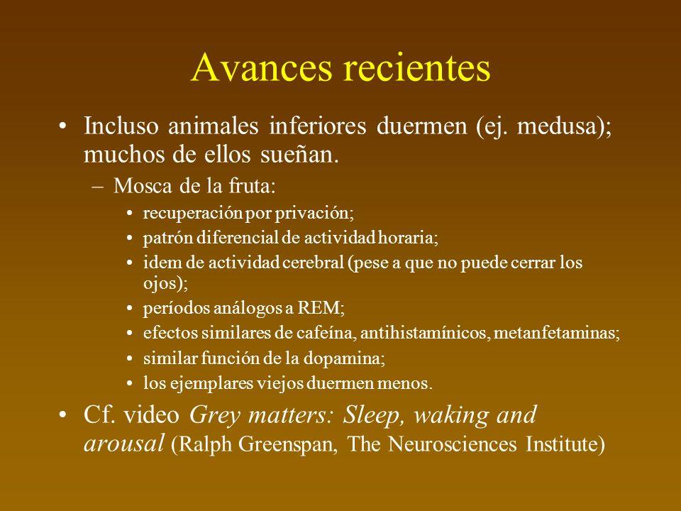 Avances recientes Incluso animales inferiores duermen (ej. medusa); muchos de ellos sueñan. Mosca de la fruta:
