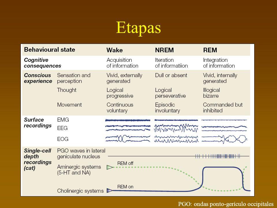 Etapas PGO: ondas ponto-gerículo occipitales