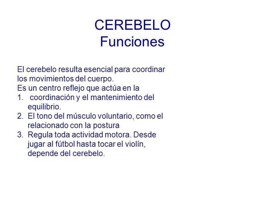 CEREBELO Funciones El cerebelo resulta esencial para coordinar