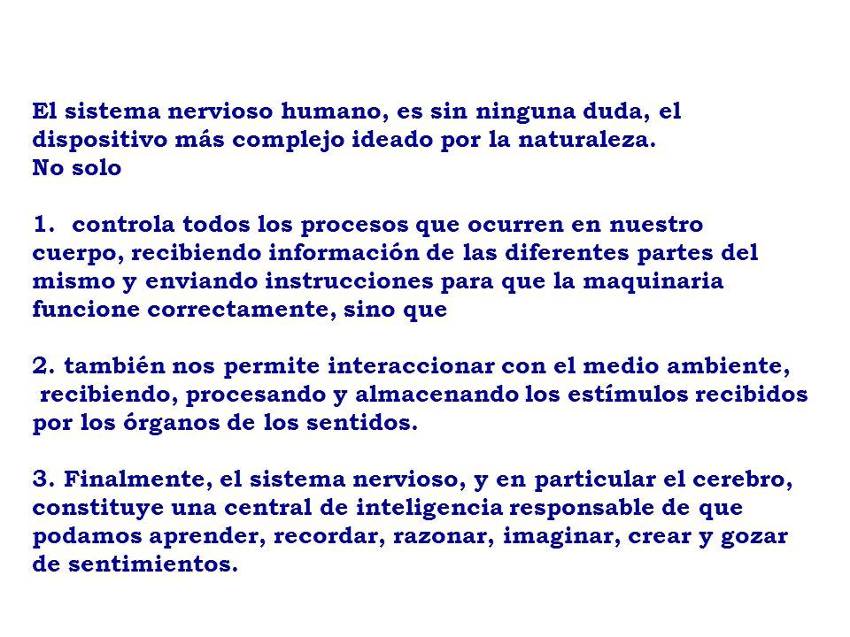 SISTEMA NERVIOSO DR. José GRECO - ppt descargar